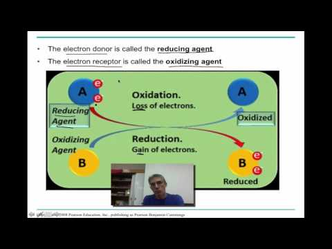 Chapter 9 Part 1 :  Cellular Respiration - Glycolysis