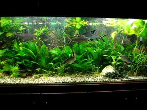 Haibarben Freshwater Tank 1400 L 391 Gallons Youtube
