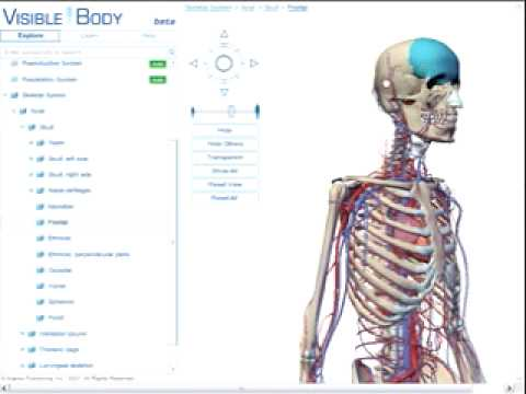 Tutorial for Visible Body: Human Anatomy