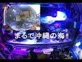【海水魚】小型のチョウチョウウヲ飼育 の動画、YouTube動画。