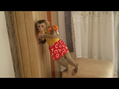 Monkey Baby Nui | The last day Pon played at Nui's house