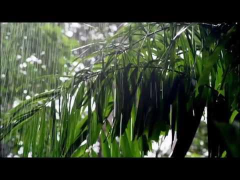 [10 Hours] Jungle Rain w/ Tropical Birds Video & Audio [1080HD] SlowTV