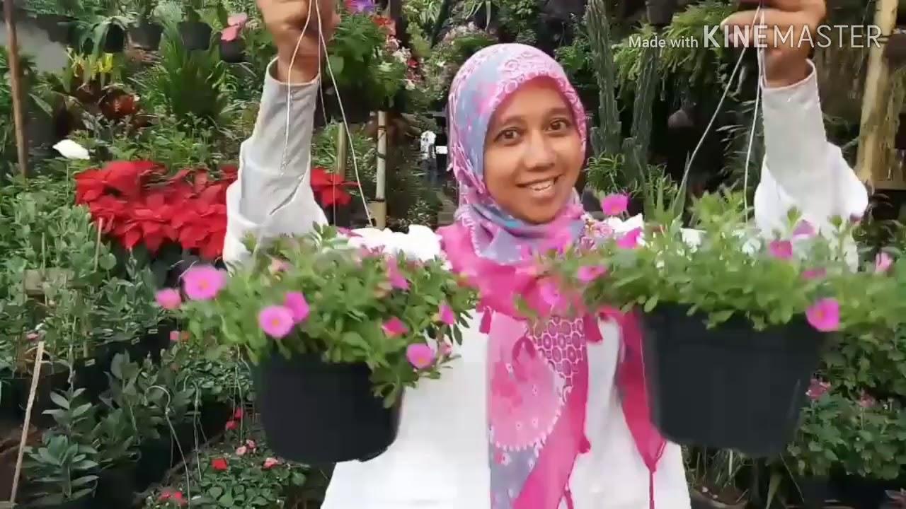 Berburu Bunga Gantung Di Graha Raya Youtube