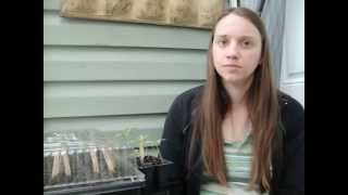 Seedling Care (how to start seeds indoors part 2)