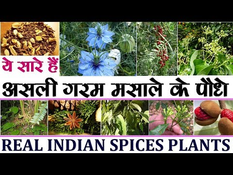 List of spices || spices name of spices masale || spices in hindi