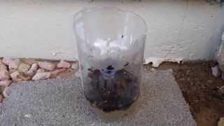 2L Soda Bottle Fly Trap