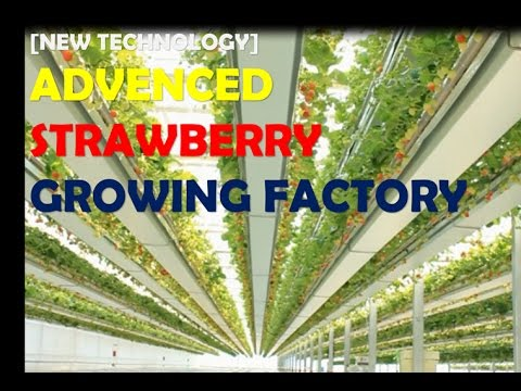 [New Tech] Aadvenced agricultural technology of strawberry greenhouse by GREENPLUS (S.korea)
