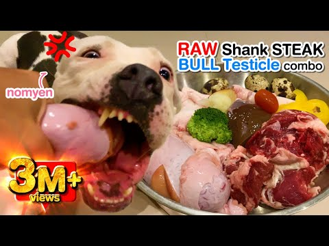 nomyen-the-pit-bull-eats-raw-beef-shank-steak&testicle-combo[asmr]-barf-mukbang-動物の咀嚼音|-犬が生の肉を食べる-4k