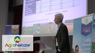 Le novità di Bayer su diserbo e protezione del grano