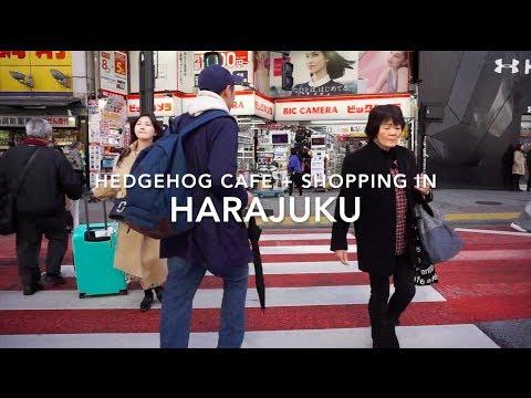 HARAJUKU HEDGEHOG CAFE & HIGH END SHOPPING | Japan Vlogs | Tokyo
