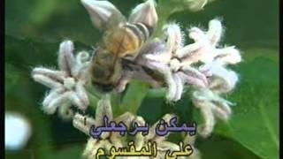Arabic Karaoke: Abed El Halim Hafez 3ala 7asb W Dab