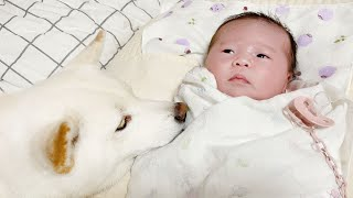 (Dogs And Babies) Changed Behavior of Dogs Ever Since They Got a New Baby Sis!
