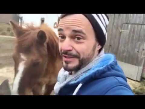 Bild: Pferde Hoschi Live - erster Livestream in 2018