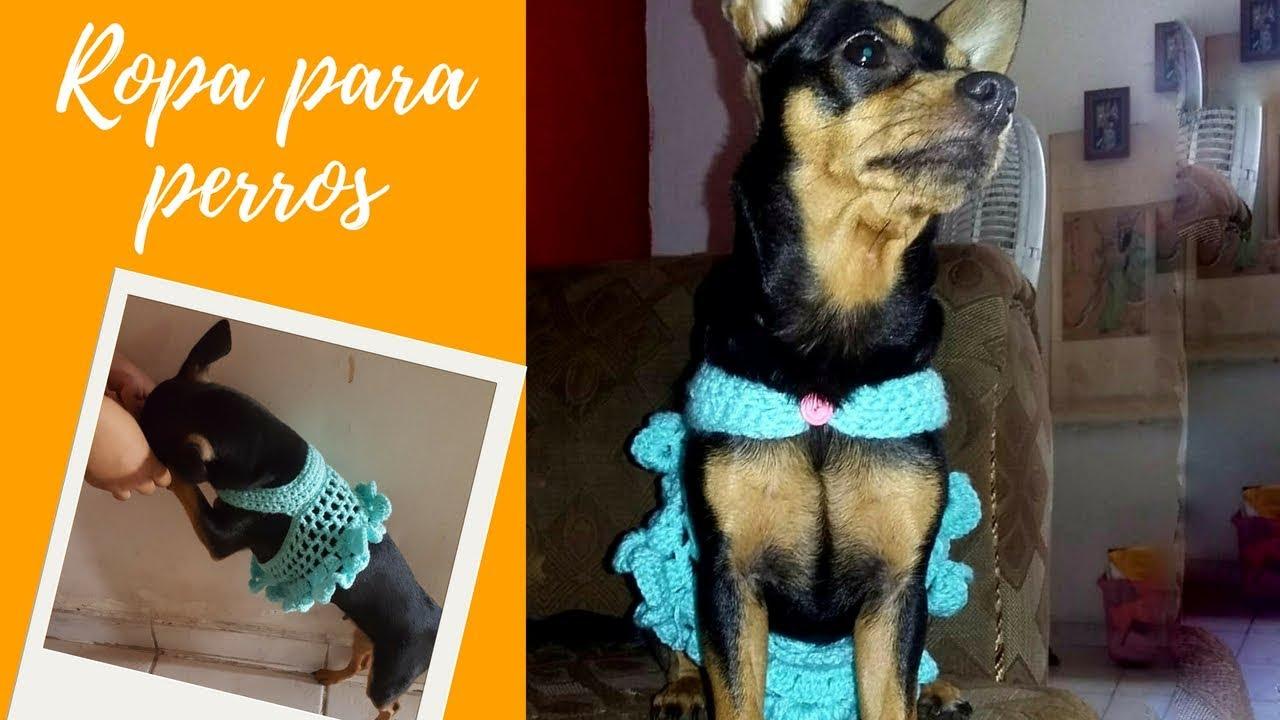 Arnés vestido para Perros a crochet o Ganchillo - YouTube
