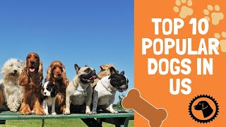 Top 10 Most Popular Dogs in the US | DOG BLOG 🐶 Brooklyn's Corner