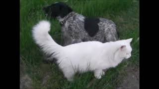 Рассказ про глухого кота  2018г.