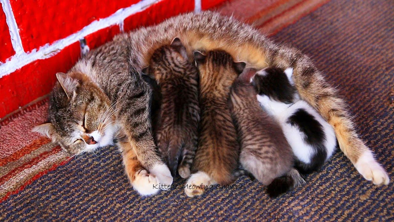 ссут друг фото забота домашних животных о потомстве вообще