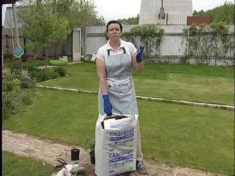 Посадка голубики и клюквы в верховой кислый торф - советы садоводам и дачникам
