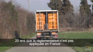 Transport des chevreaux : 20 ans d'infraction en France