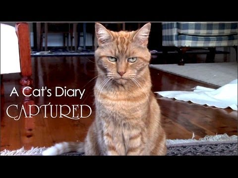 A Cat's Diary: Captured by Humans