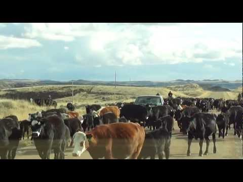 Travel through Montana to North Dakota.avi