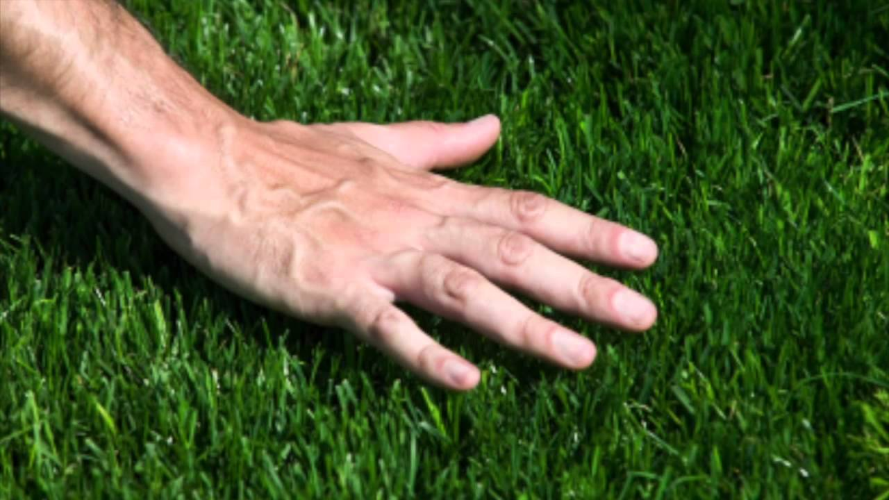 What Kind of Grass Do I Have? - YouTube