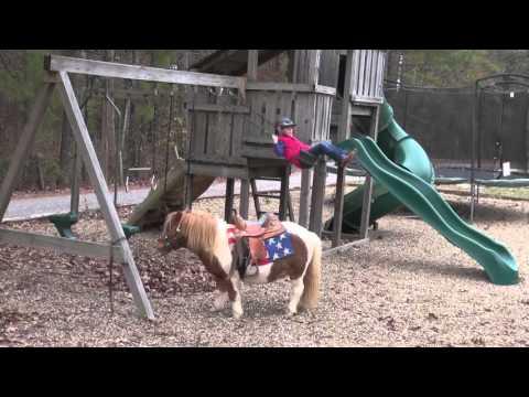 Poncho's Video By Diamond J Perfect Kids First Pony www.HorseOfMyDreams.com