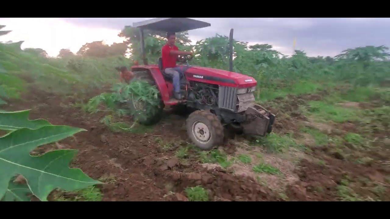 Cultivando La Papayera