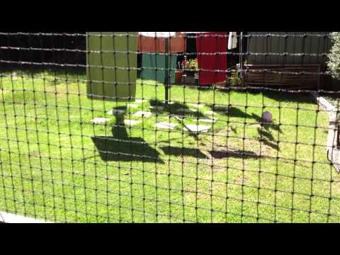 Side Of House Netted Cat Run Enclosure With 2 Doors