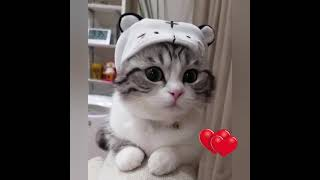 cute kittens videos funny puppies 2021-Cute baby kittens