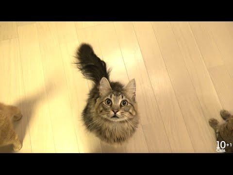 かわいい猫の鳴き声♪ すいませんとゴハンとしゃべる猫たち。Kitten And Cats Meowing