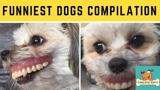 Funniest & Cutiest Dogs Reactions, Bloopers & Fails | Funny Dogs Videos Compilation #21