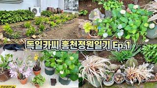 독일카씨 홍천정원일기 Ep.1 식물이사하기, 홍천정원 …