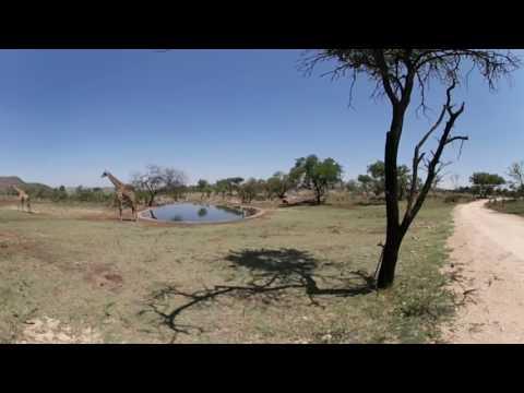 Lion Park WaterHole