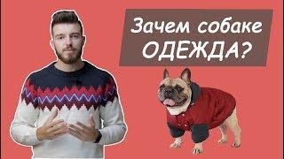 Зачем собаке одежда?