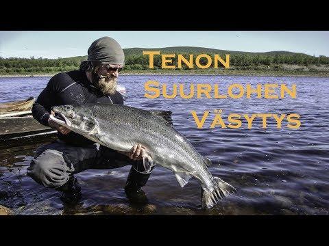 Tenon suurlohen väsytys – Playing Large Atlantic Salmon on Teno