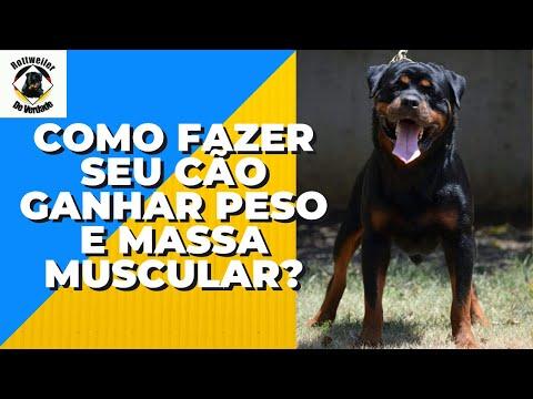 Rottweiler de Verdade: Como fazer seu cão ganhar peso e massa muscular?