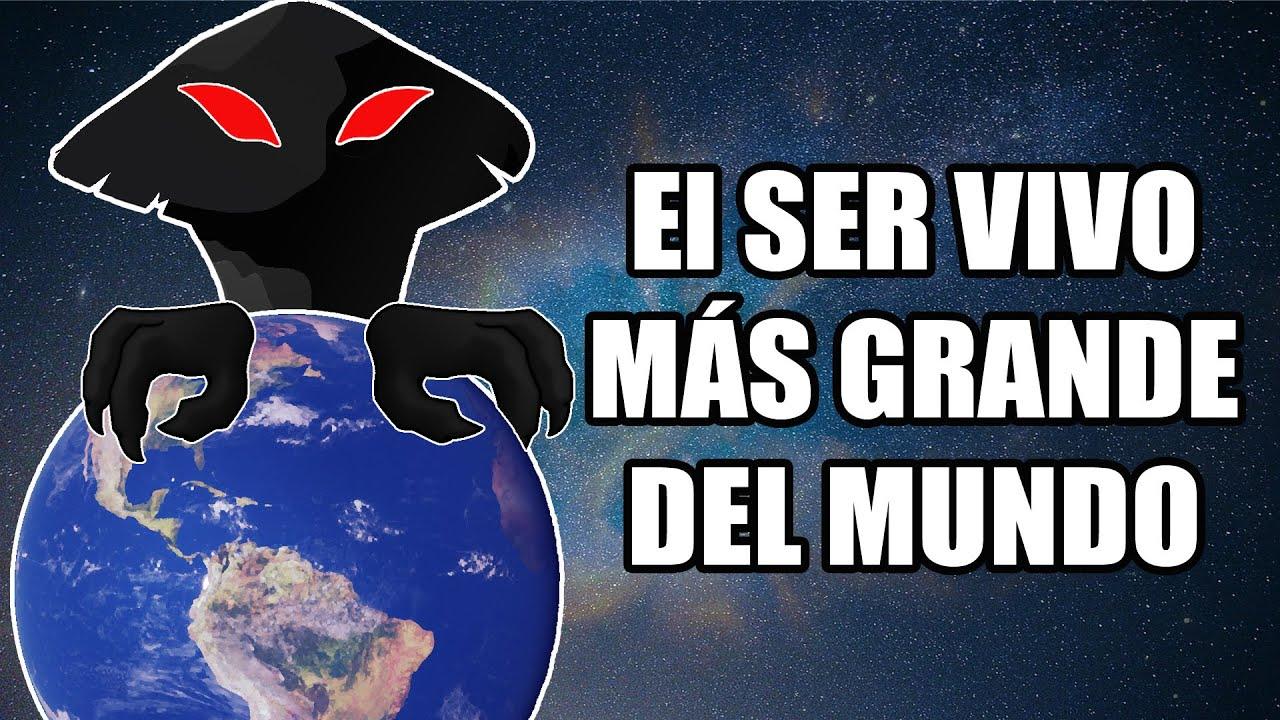 Cu l es el ser vivo m s grande del mundo youtube for Cual es el colchon mas grande