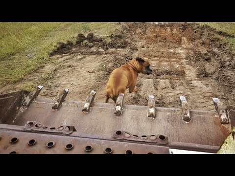 Veterinarian Squishes Dog With Bulldozer
