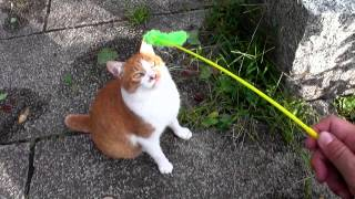 台風より怖い人の悪意・・・【魚くれくれ野良猫】 thumbnail