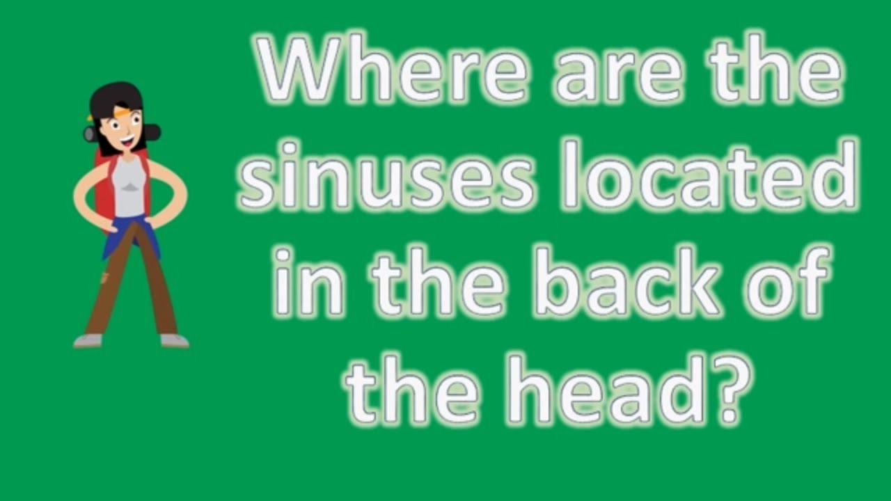 where are the sinuses located in the back of the head ? best Sinus Anatomy Diagram where are the sinuses located in the back of the head ? best health faq channel