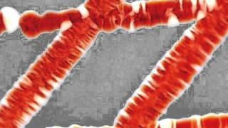 Crecimiento y producción de Prodigiosina en Serratia Marcescens.