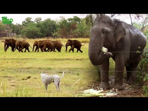 The beauty of Humanity, Protecting Elephants and their habitat
