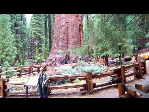 the biggest tree on the planet the General Sherman tree