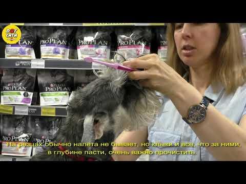 Как и зачем чистить зубы собаке