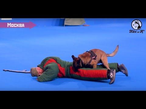 День Zoo днём. Выставка собак «Евразия 2018»