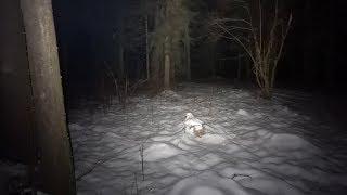 И Зачем я поперся в Лес Ночью? Правильный Фонарик Спасет Вам ЖИЗНЬ!