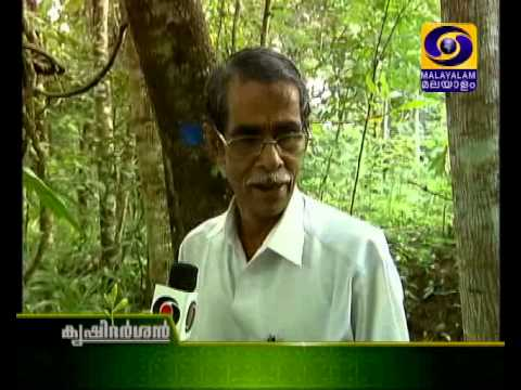 Terrace farming | മട്ടുപാവ് കൃഷി | Medicine Plant Farm in School