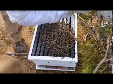 Bee Bustin Tucson AZ