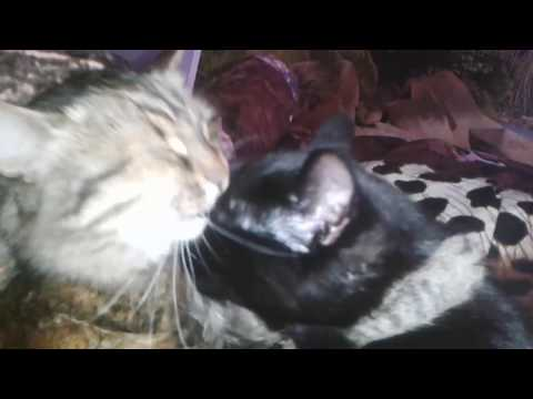 Pussy licking from YouTube · Duration:  36 seconds